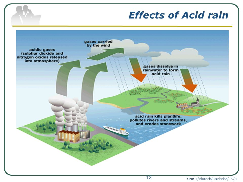 effects of acid rain research paper Indirect effect of acid rain on human health involves toxic heavy metals because these are liberated from soil when soil gets acidified the most common heavy metals are al, cd, zn, pb, hg, mn and fe.