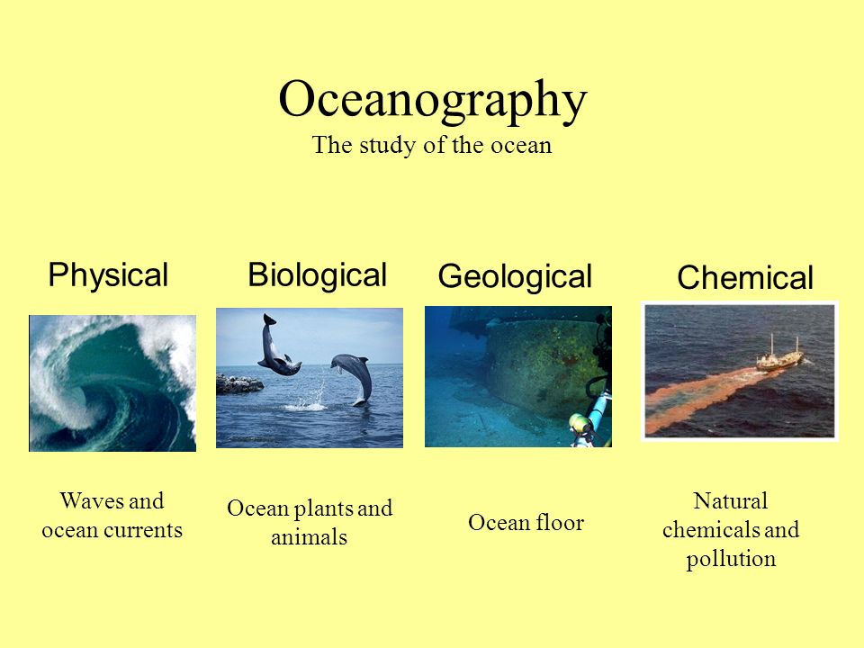 Oceanography The study of the ocean