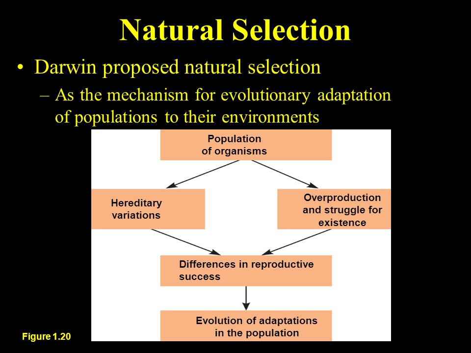 Difference Between Evolutionary Adaptation And Natural Selection