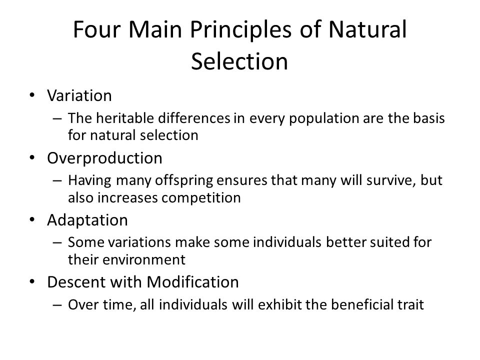 Four Main Principles of Natural Selection