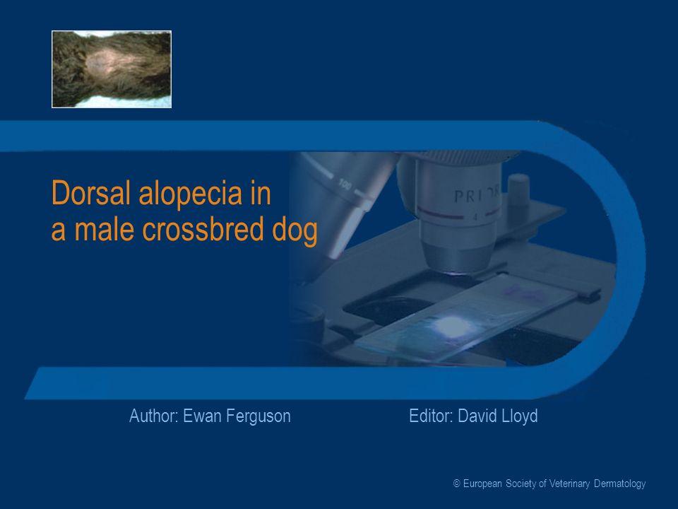 Dorsal alopecia in a male crossbred dog