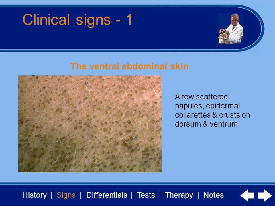 Clinical signs - 1 The ventral abdominal skin