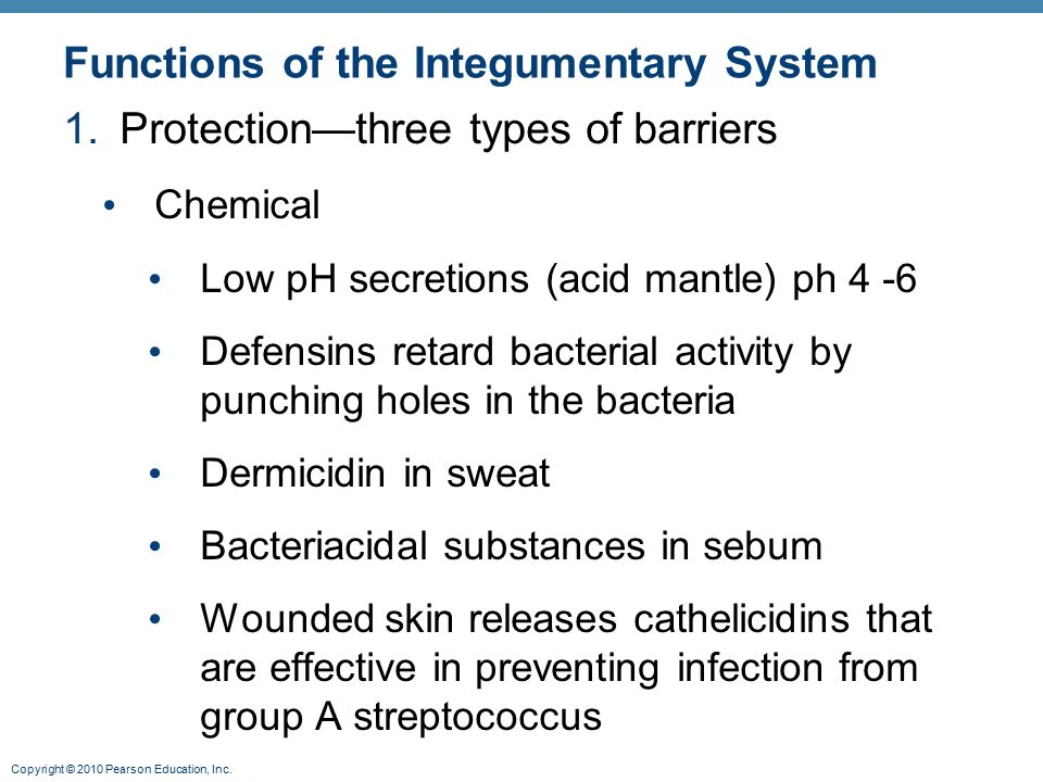 7 functions of the skin pdf
