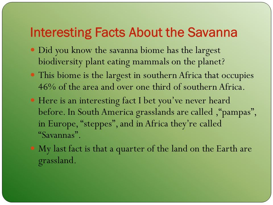 The savanna biome by selena declare ppt download for Fun facts about america
