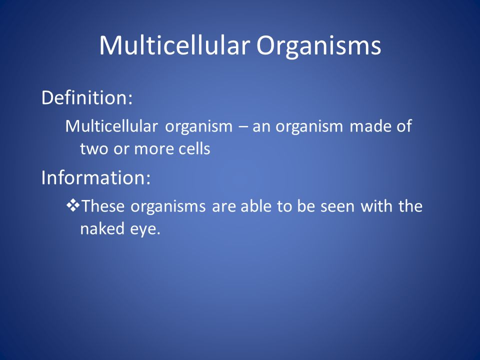 the life of an organism (a) mitosis is important in the life of an organism give two reasons why  q1 (a ) mitosis is important in the life of an organism give two.