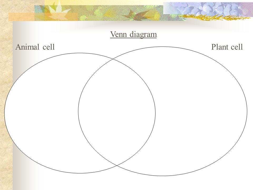 Venn diagram animal and plant cells vatozozdevelopment venn diagram animal and plant cells plant cell vs animal ccuart Images