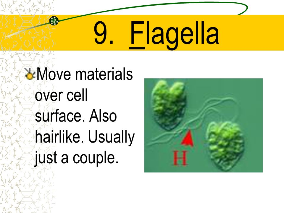 9. Flagella Move materials over cell surface. Also hairlike. Usually just a couple.