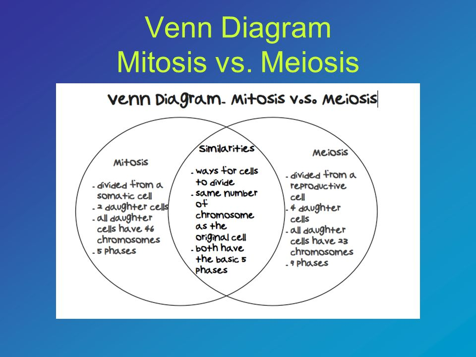 Warm up monday november 26 ppt download meiosis 87 venn diagram mitosis vs ccuart Gallery