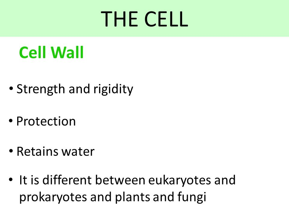 cell wall and water The human brain is about 75 percent water back to top cell wall and plasmodesmata- in addition to cell membranes, plants have cell walls.