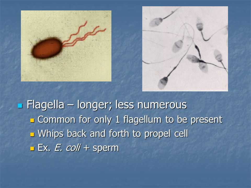 eukaryotic flagella whip back and forth relationship