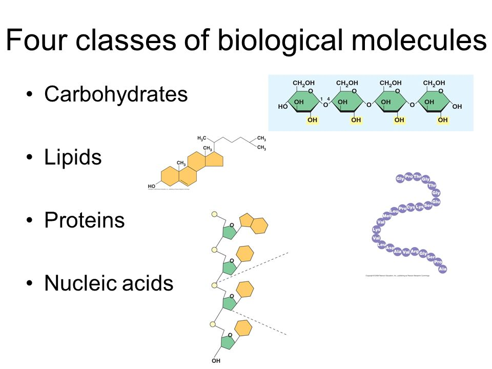 biological molecules and carbohydrates Biomolecules are the molecules that occur naturally in living organisms it  includes macromolecules like protein, carbohydrates, lipids, and nucleic acids  and.