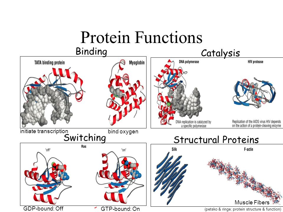 protein function Protein definition, any of numerous, highly varied organic molecules constituting a large portion of the mass of every life form and necessary in the diet of all.