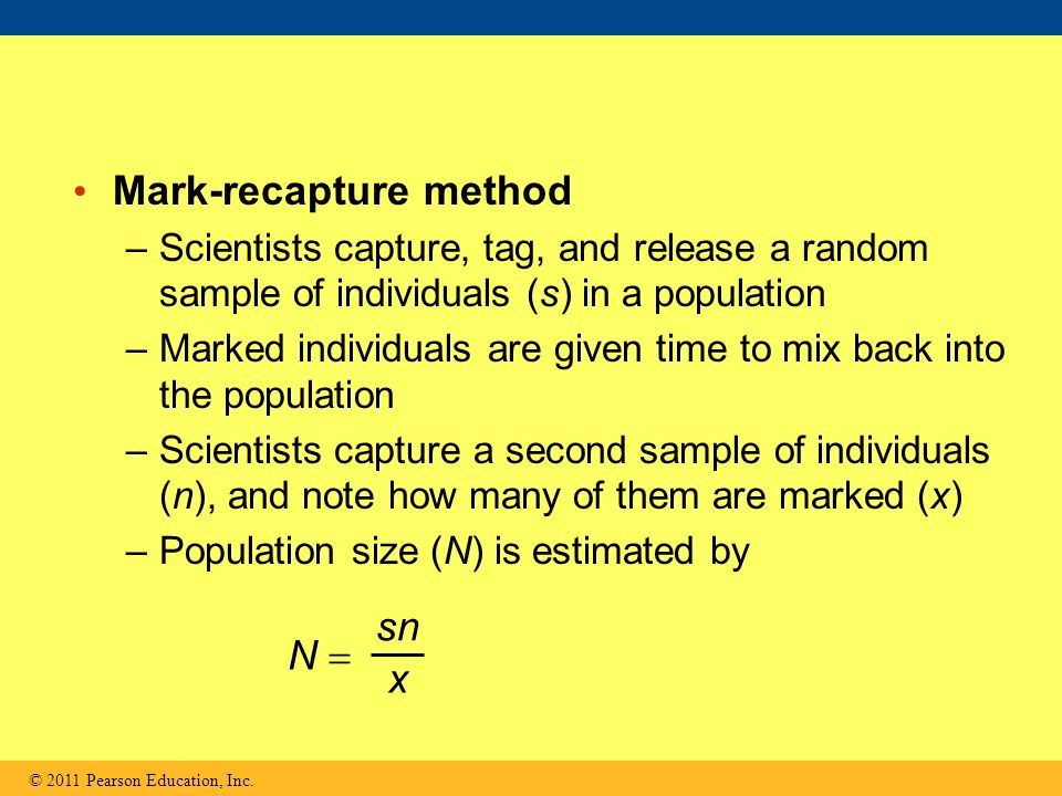 Mark release recapture method