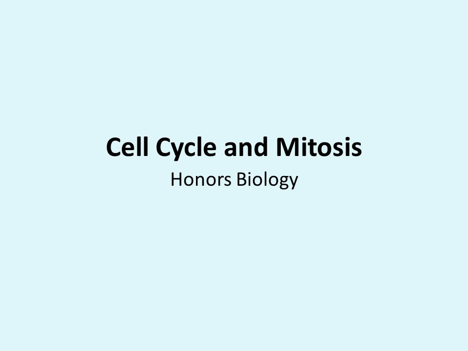 Cell Cycle and Mitosis Honors Biology