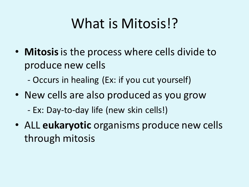 What is Mitosis! Mitosis is the process where cells divide to produce new cells. - Occurs in healing (Ex: if you cut yourself)