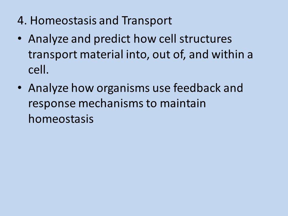 Homeostasis cell transport skills worksheet answers