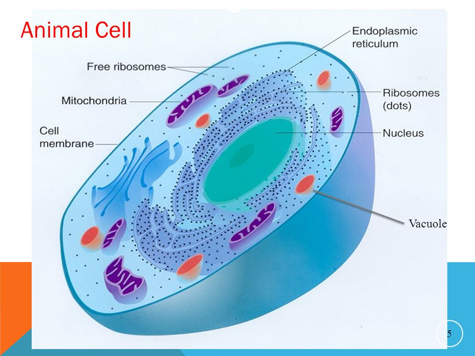 All Living Things are Made Up of Cells - ppt video online ...
