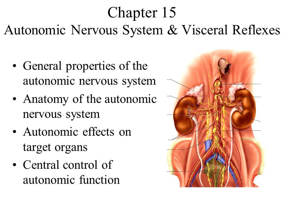 Chapter 15 Autonomic Nervous System & Visceral Reflexes - ppt video ...