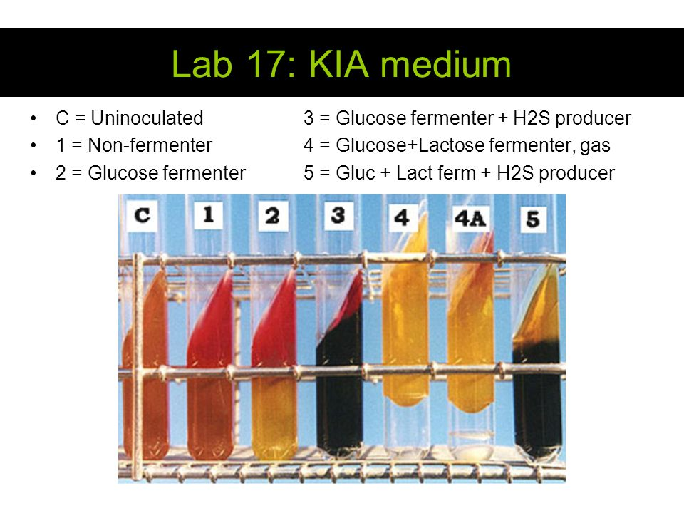 lab results fermenter Hardy diagnostics kligler iron agar (kia) the production of acid by lactose and/or dextrose fermentation results in color changes of the phenol red ph indicator infectious material should be submitted directly to the laboratory without delay and protected from excessive heat and cold.