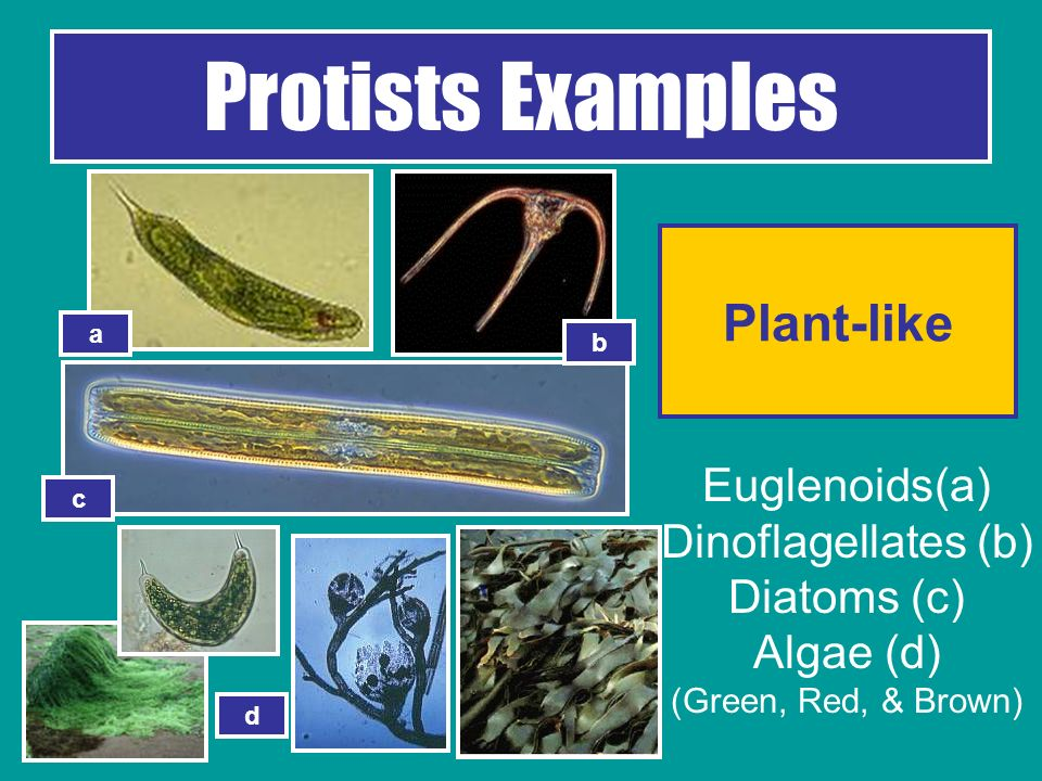 The Six Kingdoms of Life - ppt video online download
