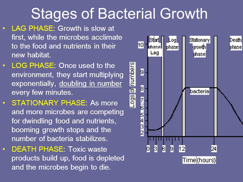 Stages of Bacterial Growth