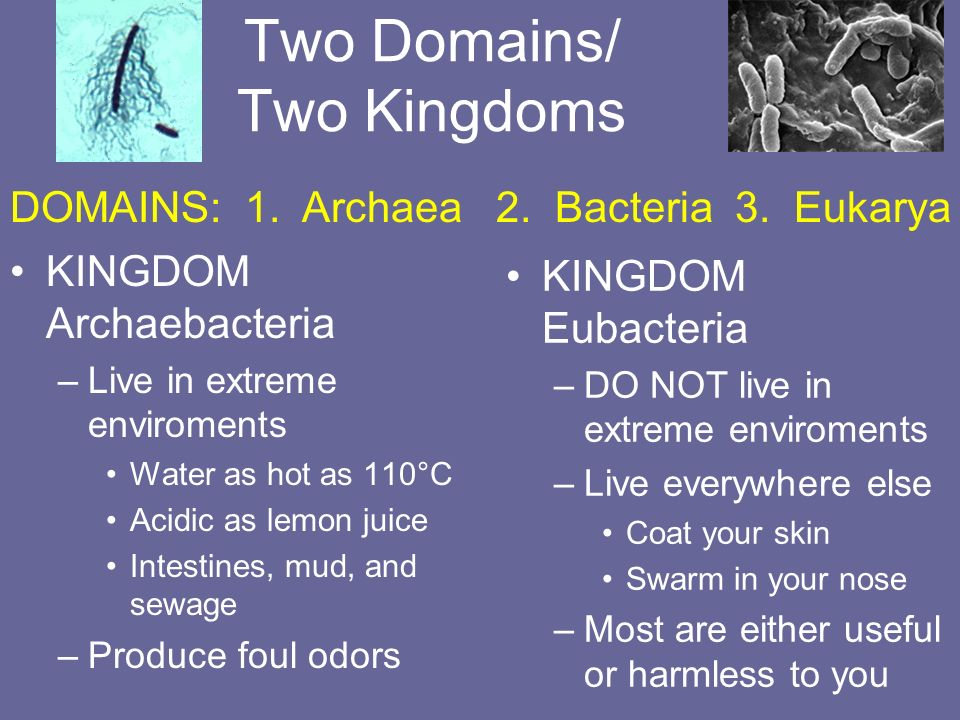 Two Domains/ Two Kingdoms