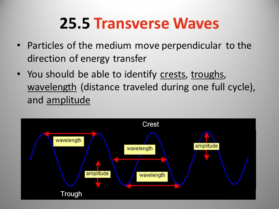 25.5 Transverse Waves Particles of the medium move perpendicular to the direction of energy transfer.