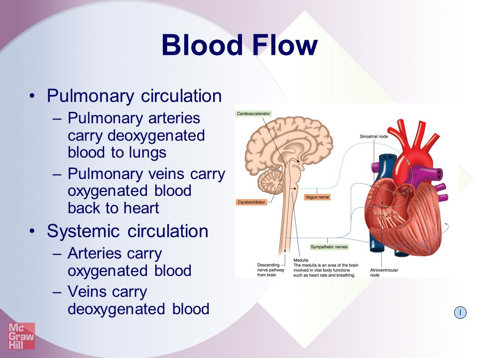 The Pathway of Blood Flow Through the Heart Animated ...