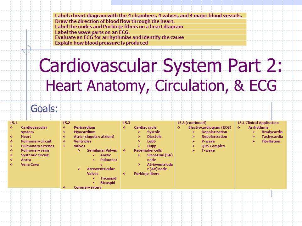 Cardiovascular System Part 2: Heart Anatomy, Circulation, & ECG ...