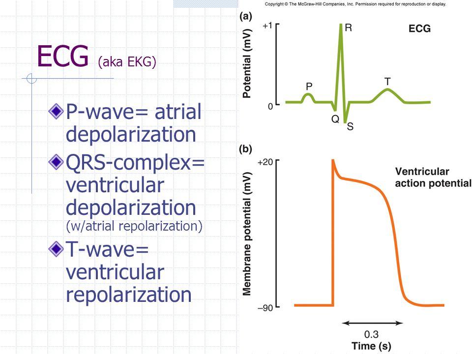 Ecg Atrial Depolarization