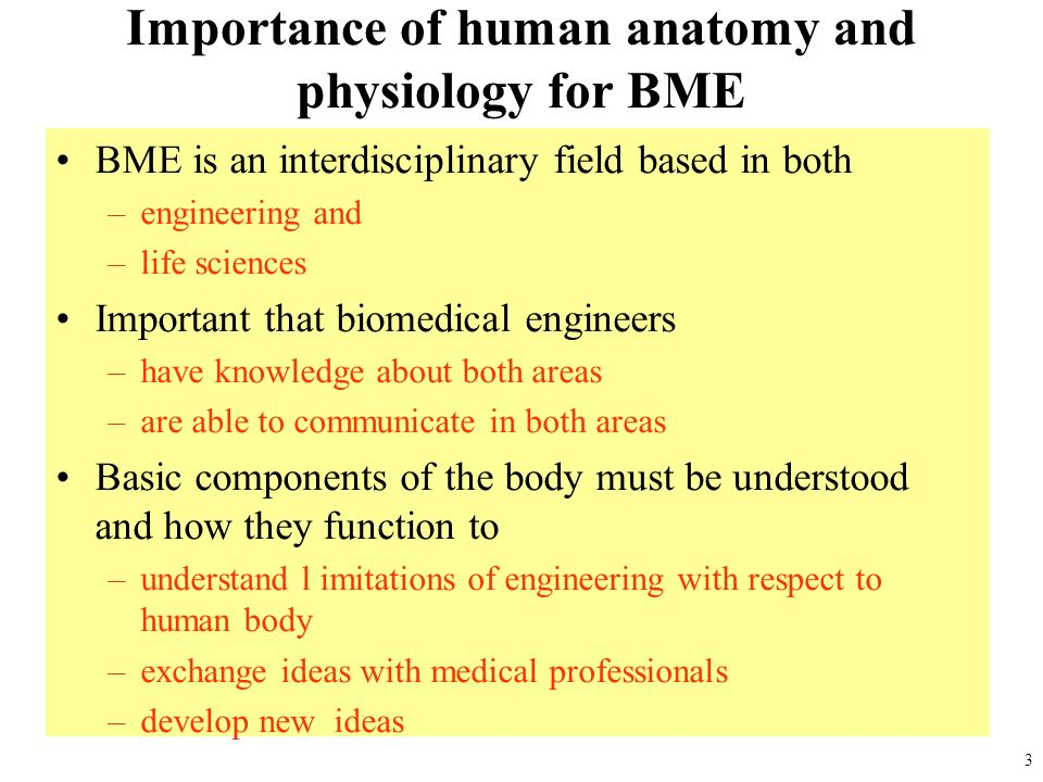 the importance of understand human anatomy essay In addition to the main subdivisions of human anatomy described above, a third branch, called basic anatomy, is considered of significant importance.