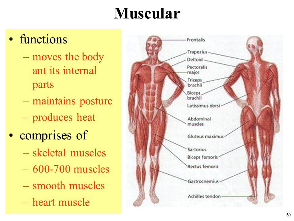 Biomedical Instrumentation Ppt Download