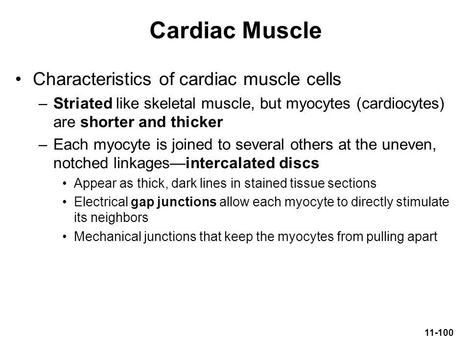 Cardiac Muscle Characteristics of cardiac muscle cells