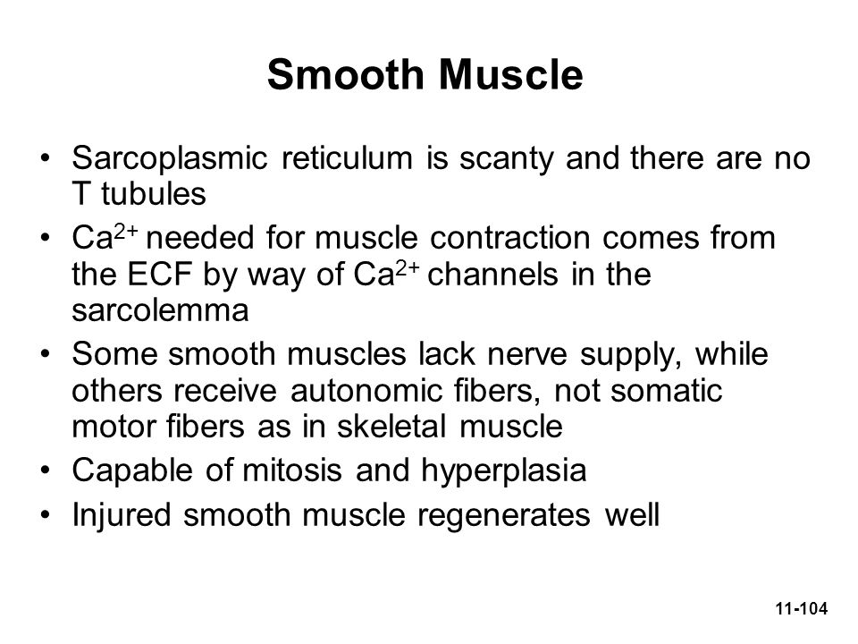 Smooth Muscle Sarcoplasmic reticulum is scanty and there are no T tubules.