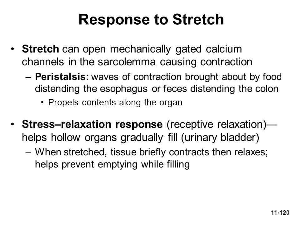 Response to Stretch Stretch can open mechanically gated calcium channels in the sarcolemma causing contraction.