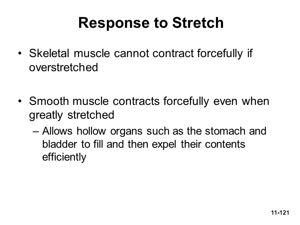 Response to Stretch Skeletal muscle cannot contract forcefully if overstretched. Smooth muscle contracts forcefully even when greatly stretched.