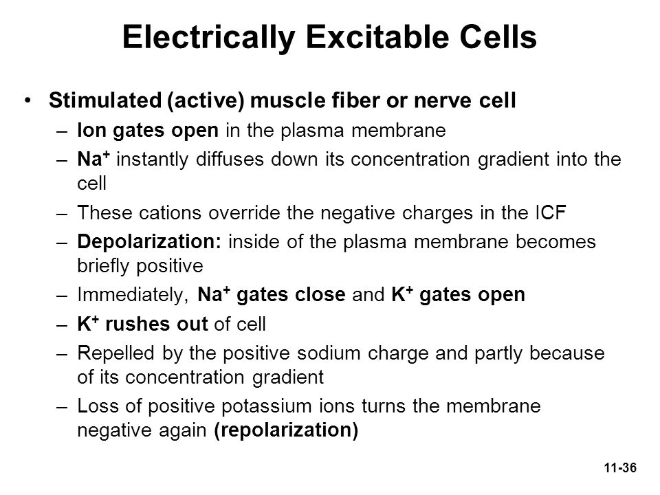 Electrically Excitable Cells