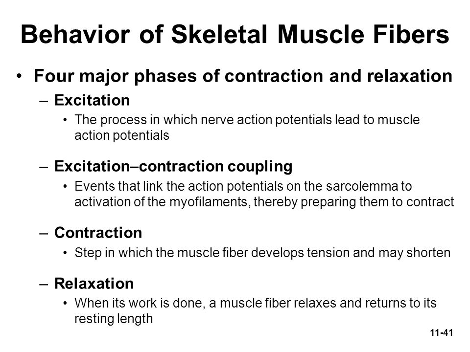 explain how a skeletal muscle contracts and relaxes 11042001 learn what occurs within a skeletal muscle contraction,  and the muscle relaxes  get the best of howstuffworks by email.