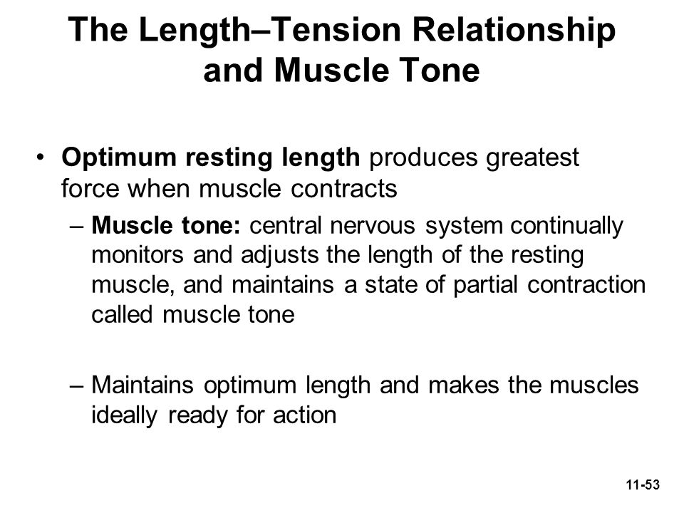 The Length–Tension Relationship and Muscle Tone