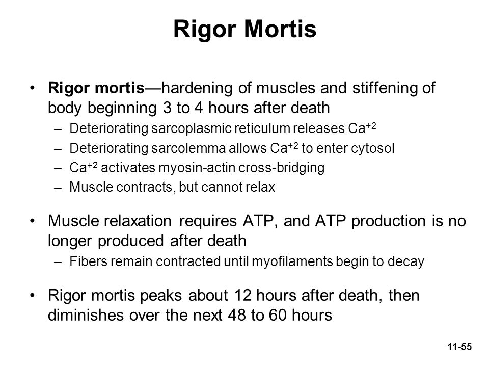 Rigor Mortis Rigor mortis—hardening of muscles and stiffening of body beginning 3 to 4 hours after death.