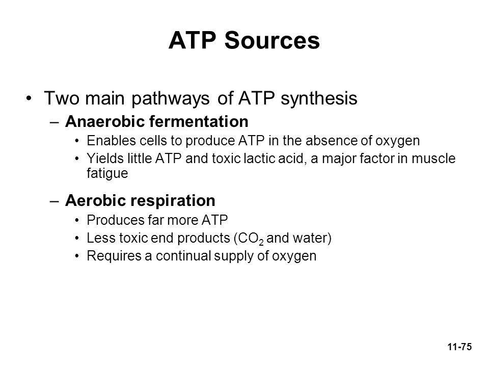 ATP Sources Two main pathways of ATP synthesis Anaerobic fermentation