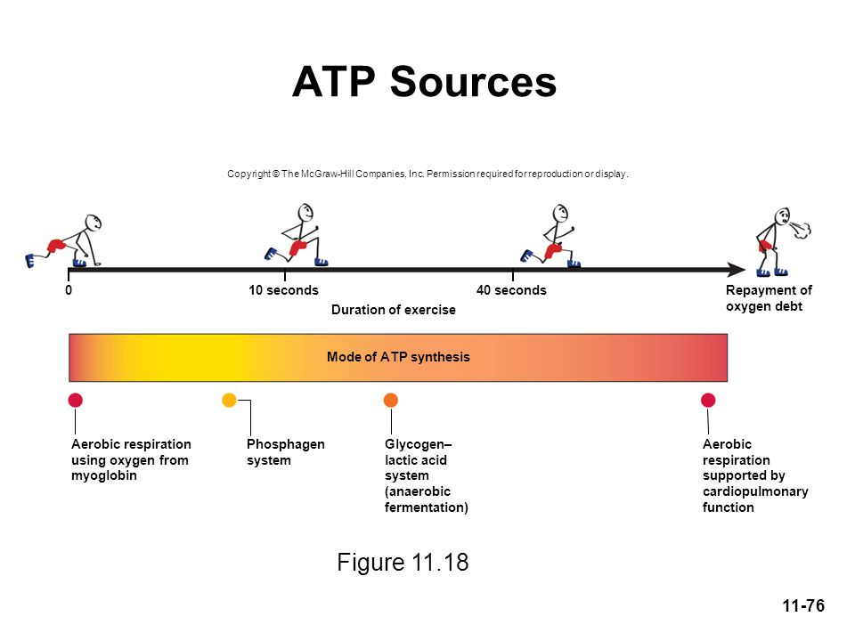ATP Sources Figure 11.18 10 seconds 40 seconds Repayment of