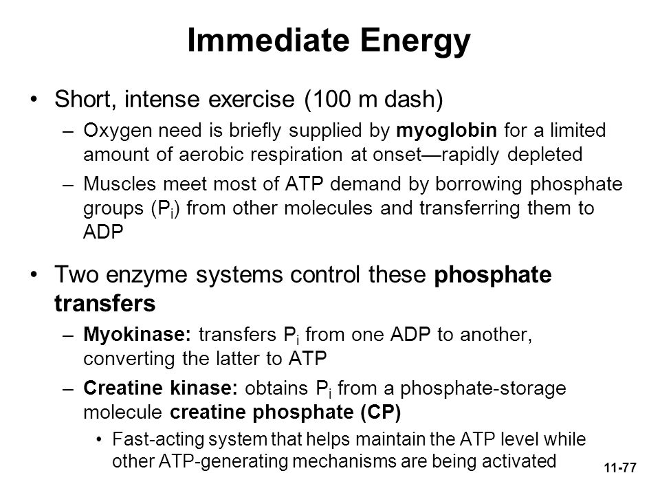 Immediate Energy Short, intense exercise (100 m dash)