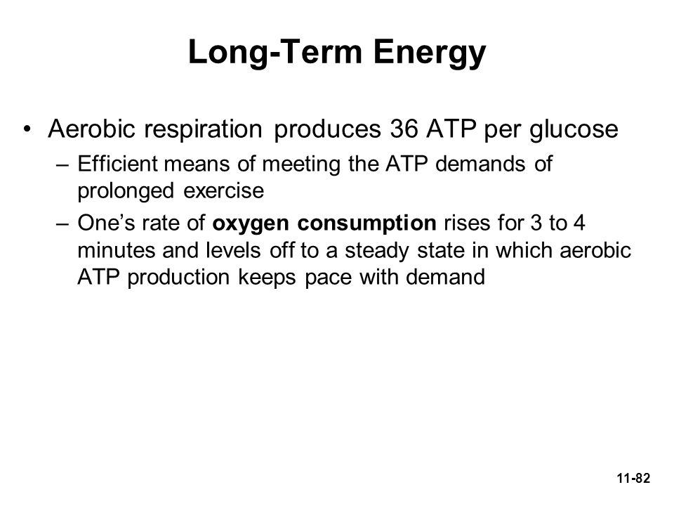 Long-Term Energy Aerobic respiration produces 36 ATP per glucose