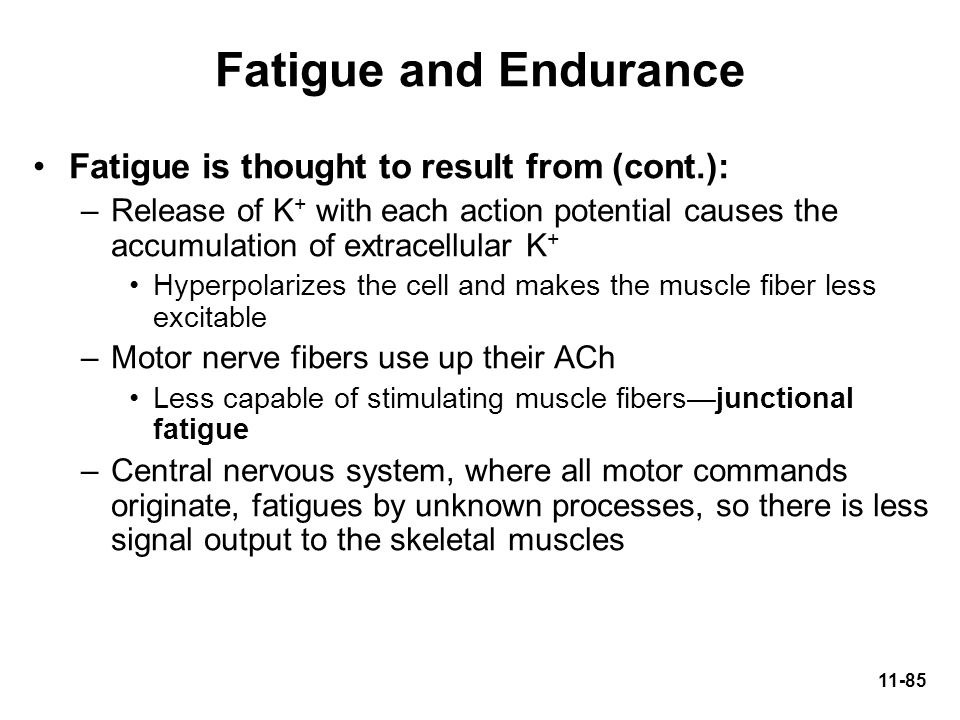 Fatigue and Endurance Fatigue is thought to result from (cont.):
