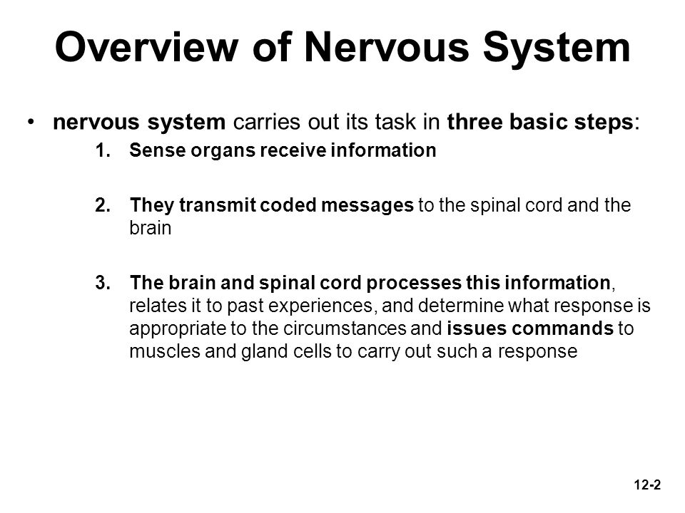 an overview of the neural tissue 231 overview of the digestive system nervous tissue allows the body to receive signals and transmit information as electric impulses from one region of the body.