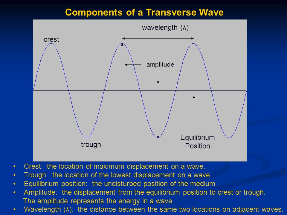 Components of a Transverse Wave