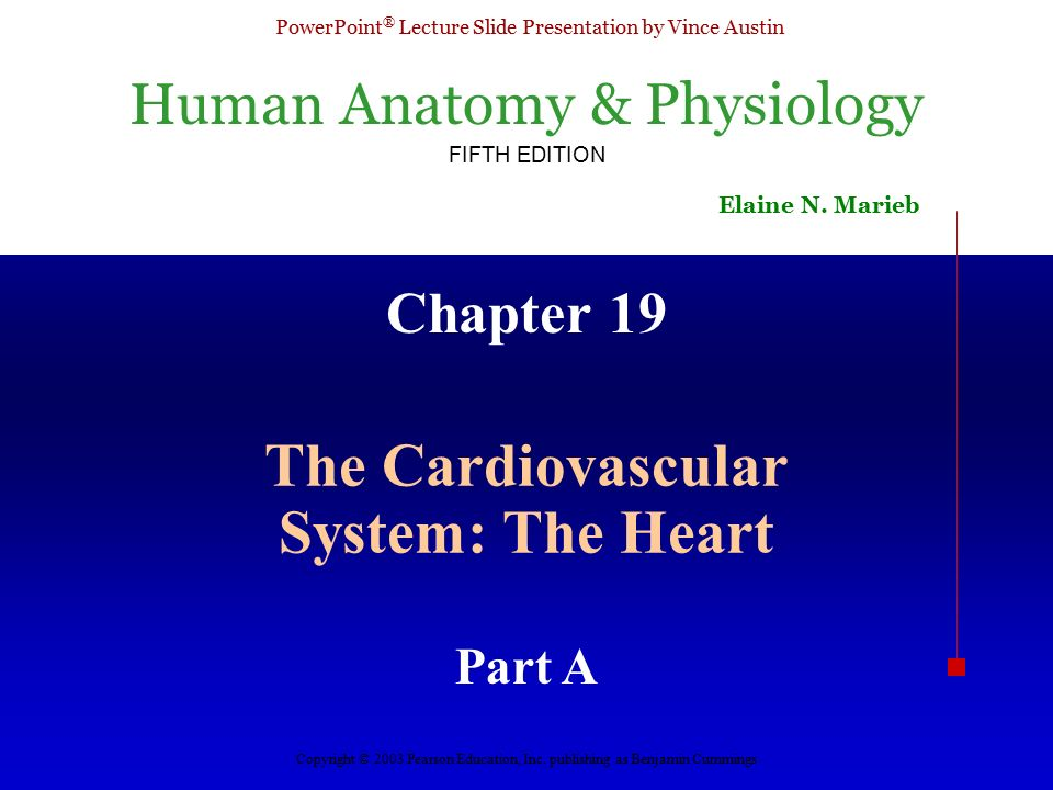 The Cardiovascular System: The Heart - ppt video online download