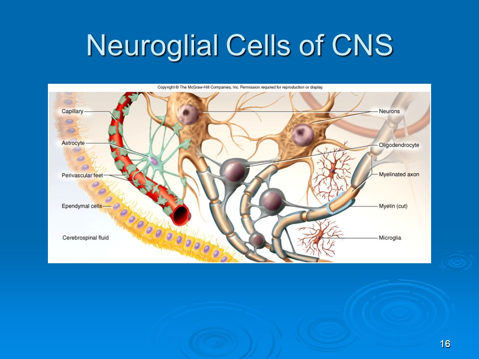 neuroglial cells coloring pages - photo#24
