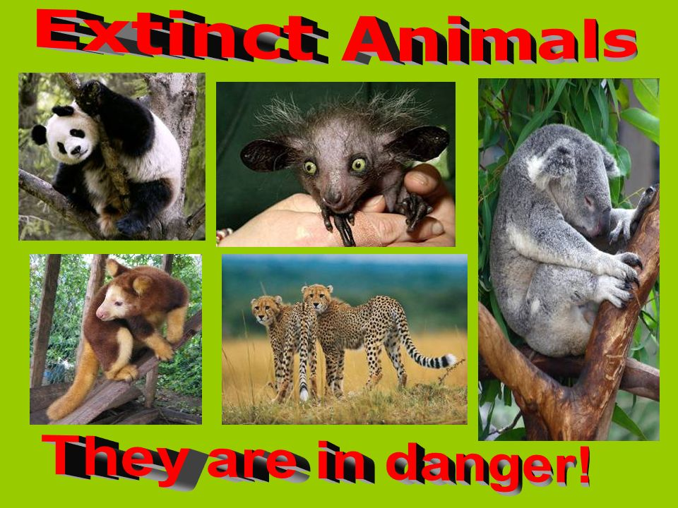 Extinct Animals They are in danger!